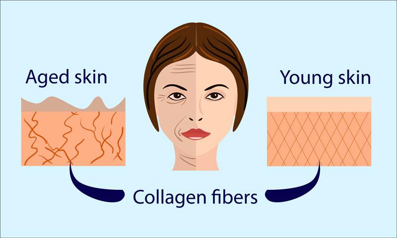 Collageen vezels - uitleg hoe het is in een jonge huid vs een verouderde huid