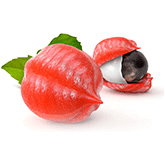 Een guarana vrucht, waarvan er een open is en dus de pit te zien is