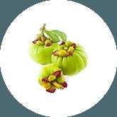 Twee normale garcinia cambogia vruchten en een kleintje ervoor