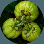 Drie garcinia cambogia vruchten in een rondje op een groen blad