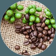 Groene koffie bonen boom met wat koffie bonen er naast