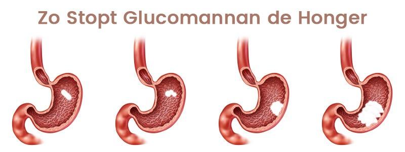 infographic glucomannan - vermindering van de honger afgebeeld met getekende magen