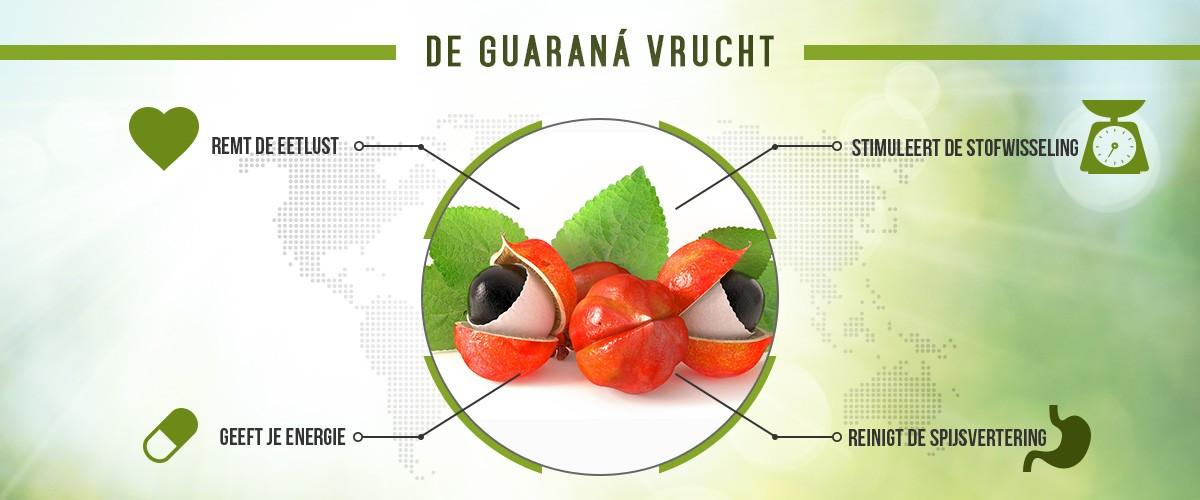 infographic guarana - middenin guarana vruchten met rondom een cirkel met voordelen zoals geeft energie en remt de eetlust
