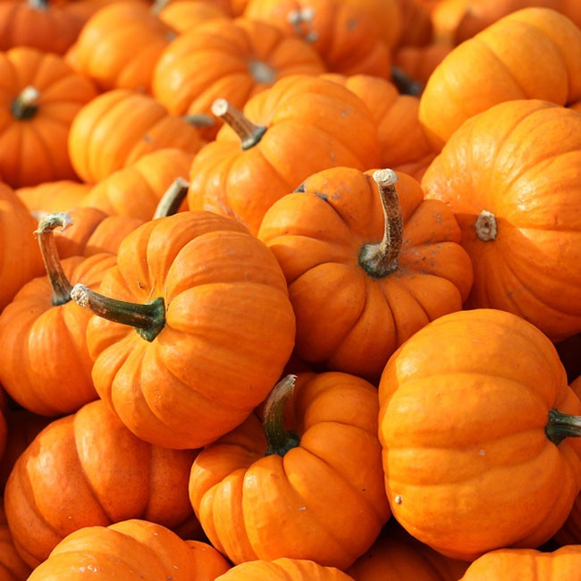 5 ingrediënten voor een seizoensgebonden detox deze herfst