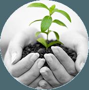 Twee hand bij elkaar die een kommetje vormen waar wat aarde en een klein plantje in zitten