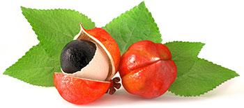 Een gekoesterd fruit