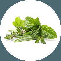 Verschillende soorten blaadjes zoals moringa, groene thee, groene koffie en glucomannan