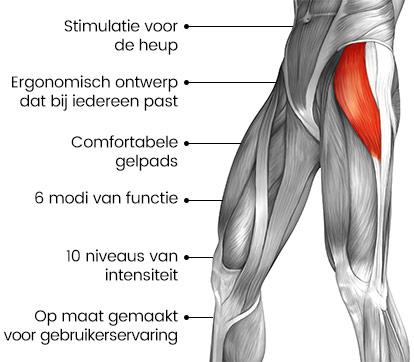 Tekening van spieren in het mannelijk lichaam met een rood gedeelte bij de spieren die getraind worden door het heup apparaat